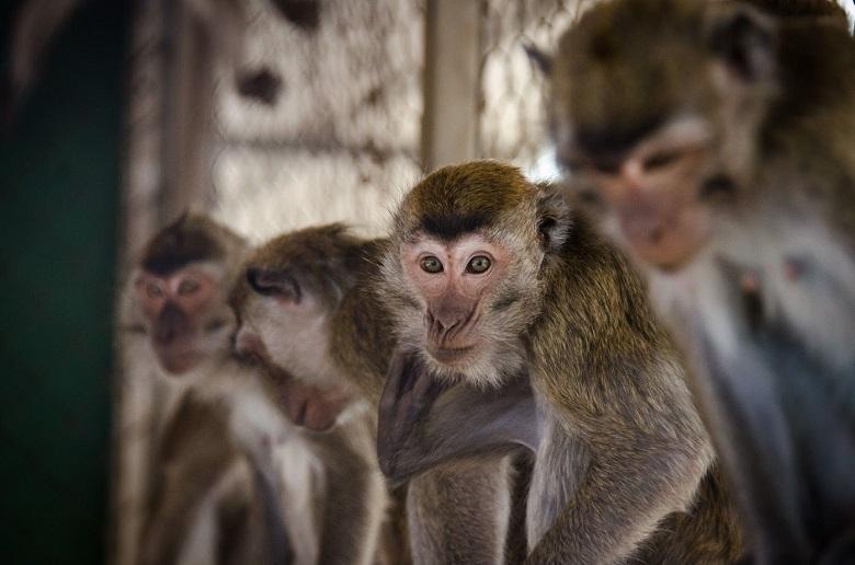 פעולת חירום: מאכילים את קופי חוות מזור