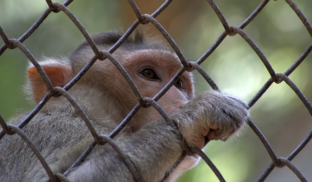 לפתוח את הכלוב - הכרה בבעלי חיים כבעלי אישיות משפטית