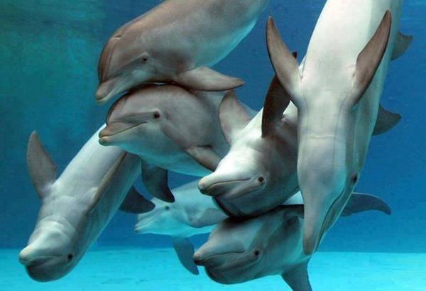 לכל דולפין יש שם