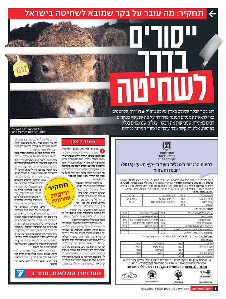 תחקיר: מה עובר על בקר שמובא לשחיטה בישראל