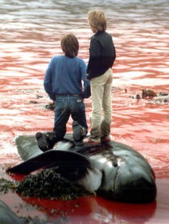 ילדים עומדים על דולפין שנשחט