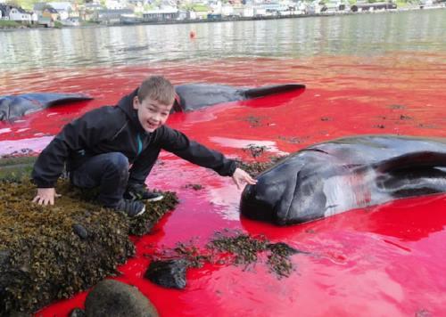 ילד עם דולפין שנשחט