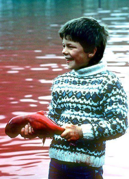 ילד מחזיק עובר דולפין שהוצא מבטן אמו שנשחטה
