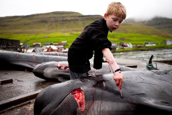 ילד מבתר דולפין שנשחט