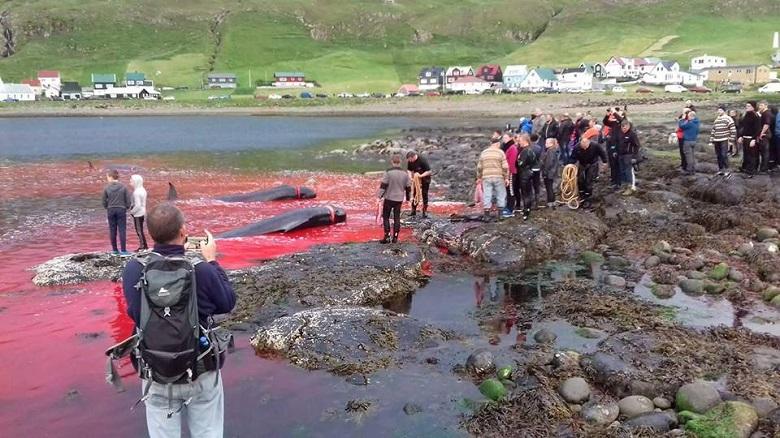 איי פארו: ילדים לומדים לרצוח דולפינים