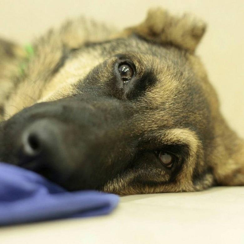 תצפית בית (כלבת) - התנאים המקדמיים - עשה ואל תעשה