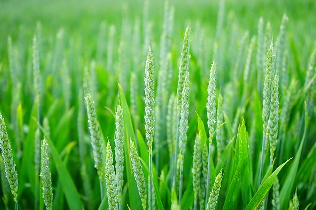 טבעונות - למען צמחים ולמען חיות שדה
