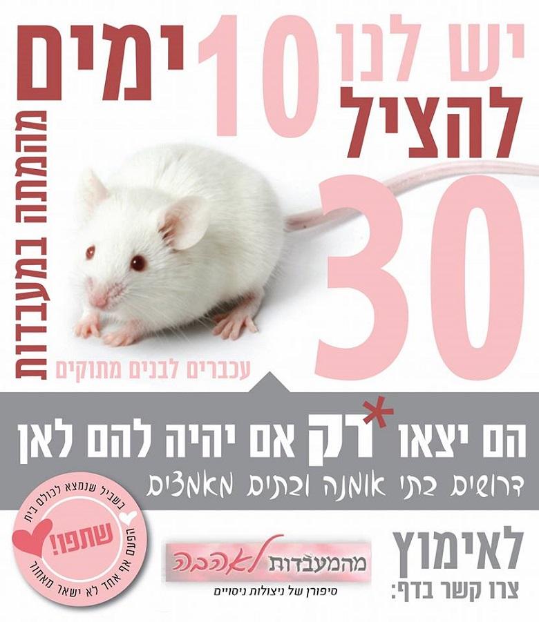 עכברים ממעבדת ניסויים מחפשים בתים