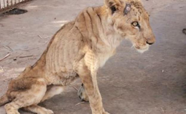 התעללות בבעלי חיים תופסת מקום נרחב בסיקור התקשורתי ובדיון הציבורי