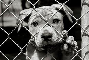 ה-FBI יתחיל לעקוב אחרי התעללות בבעלי חיים