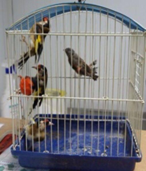 הברחת ציפורים