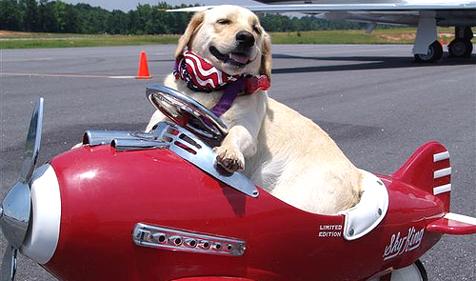 חברת התעופה דלתא מפסיקה להטיס בעלי חיים בתא המטען
