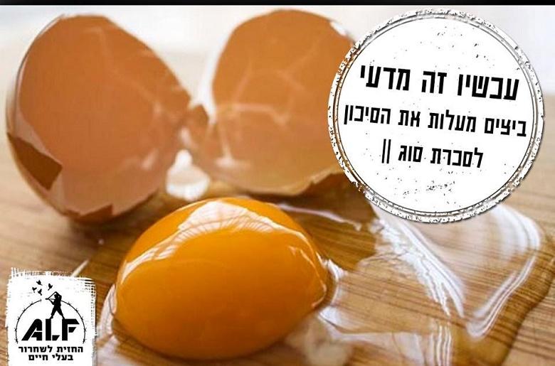 עכשיו זה מדעי: ביצים מעלות את הסיכון לסכרת סוג 2