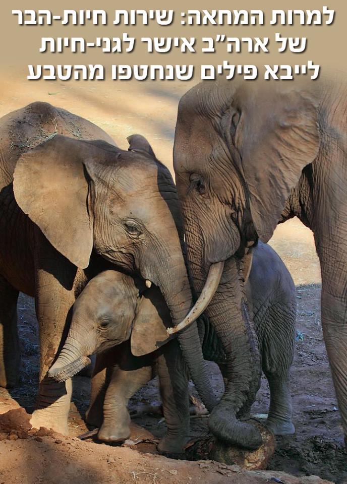 אושר ייבוא פילים שנחטפו