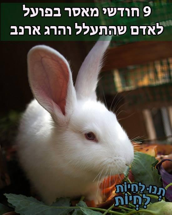 תשעה חודשי מאסר בפועל לאדם שהתעלל והרג ארנב