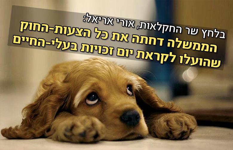 נדחתה שורה של הצעות חוק להגנת בעלי-חיים