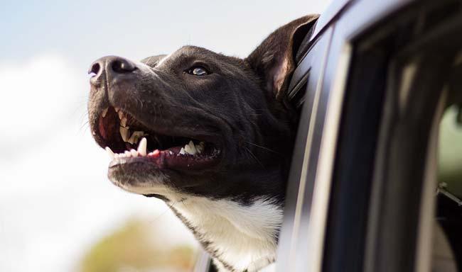 השארת בעלי חיים בכלי רכב תהיה עבירה
