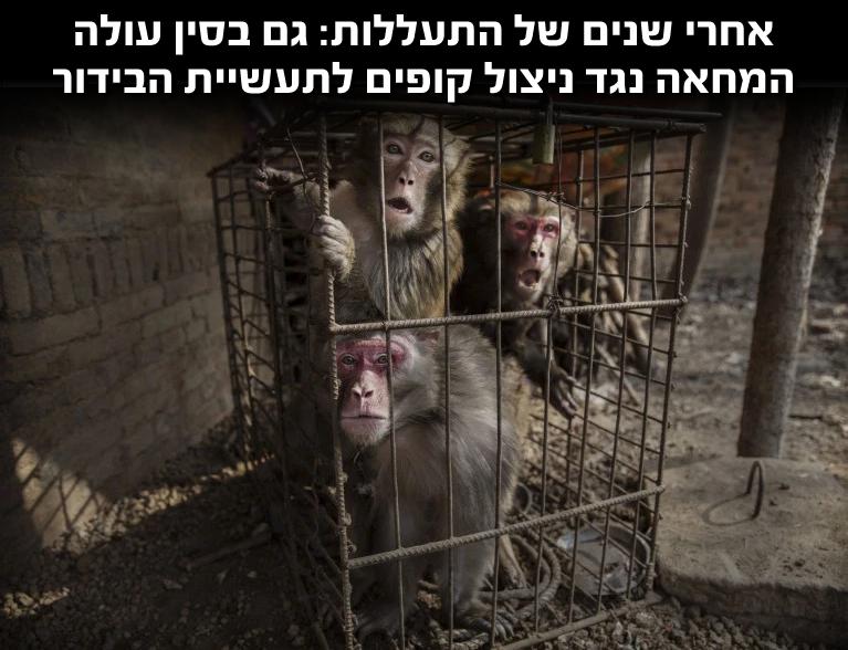 סין: מחאה נגד ניצול קופים לתעשיית הבידור
