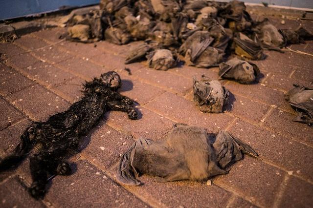 מאות הרוגים, פצועים וחסרי בית בהריסת בניין בחדרה