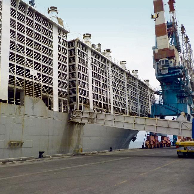 אוניית המשלוחים החיים MAYSORA עוגנת בנמל אילת