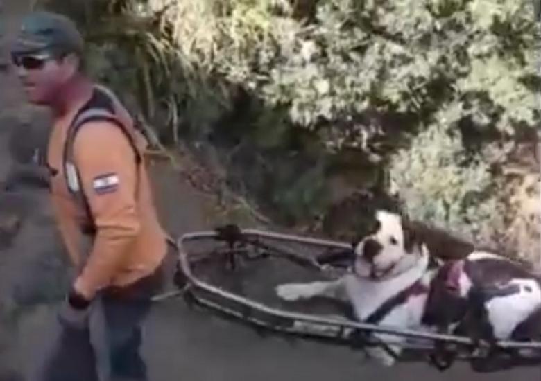 שני כלבים נפגעו בטיול ברמת הגולן וחולצו