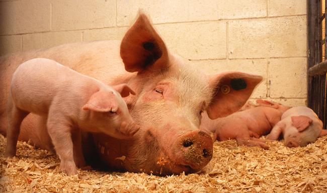 מהפיכה ברווחת בעלי חיים למשאל עם