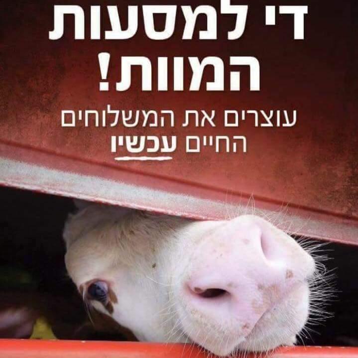 קמפיין שלטי חוצות - עכשיו בישראל