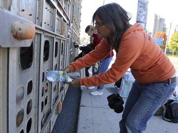 פעילה עומדת למשפט על השקיית חזירים