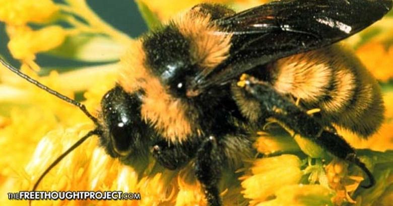 דבורי בר בסכנת הכחדה