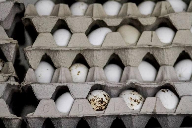לול ביצי חופש נסגר עקב סלמונלה