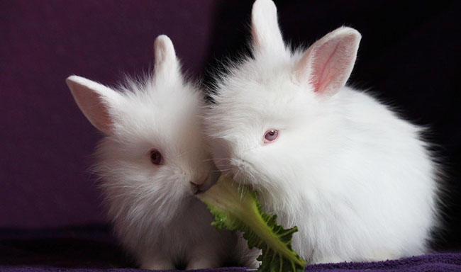 טאיוואן: ניסויים בבעלי חיים על מוצרי קוסמטיקה ייפסקו בשנת 2019