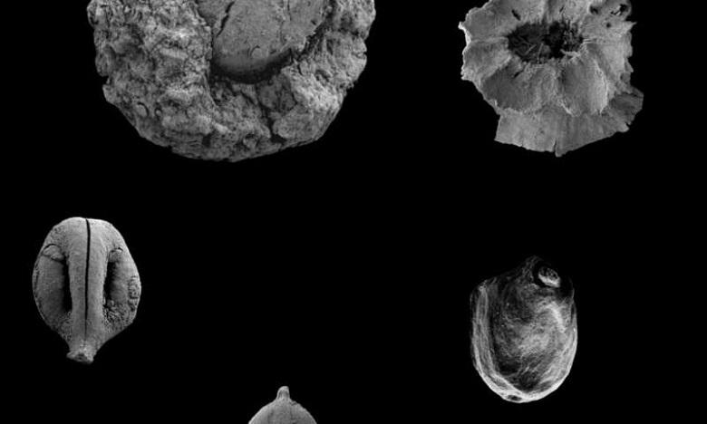 ארכאולוגים: תזונת הפליאו הייתה מבוססת צמחים