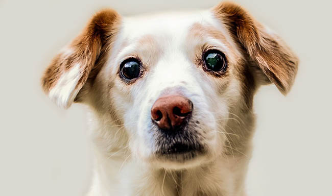 נסגר שוק בשר כלבים הגדול ביותר בקוריאה הדרומית