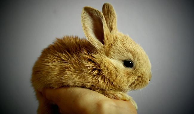 ממשלת הולנד אוסרת על ניסויים בבעלי חיים