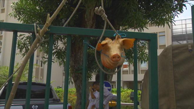 ראש חזיר שנתלה במשרד ממשלתי