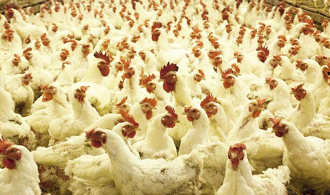 ברק אובמה משלים את חוק הרפורמה לרווחתם של בעלי חיים