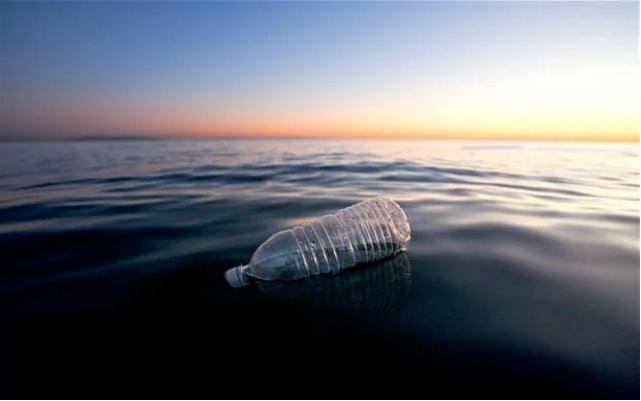 צרכני מאכלי ים מעכלים 11,000 חלקיקי פלסטיק מדי שנה