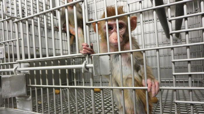 משרד החקלאות האמריקאי נתבע לאחר שהסיר מאתרו מידע אודות רווחת בעלי חיים