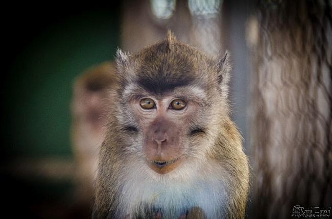 דיון בוועדת החינוך על ביזיון המדינה בהתנערותה מאחריות על קופי חוות מזור