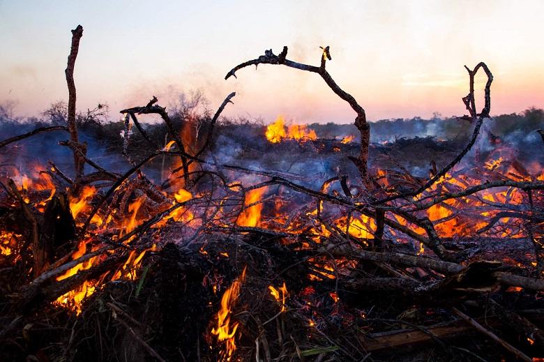 ברגר קינג: נחשפה השפעתה של הרשת על בירוא יערות