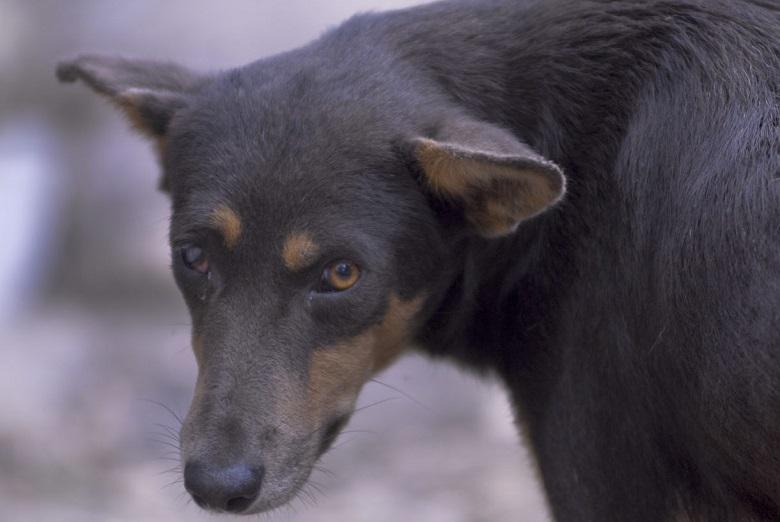 גואטמלה חוקקה חוקים מרחיקי לכת נגד התעללות בבעלי חיים