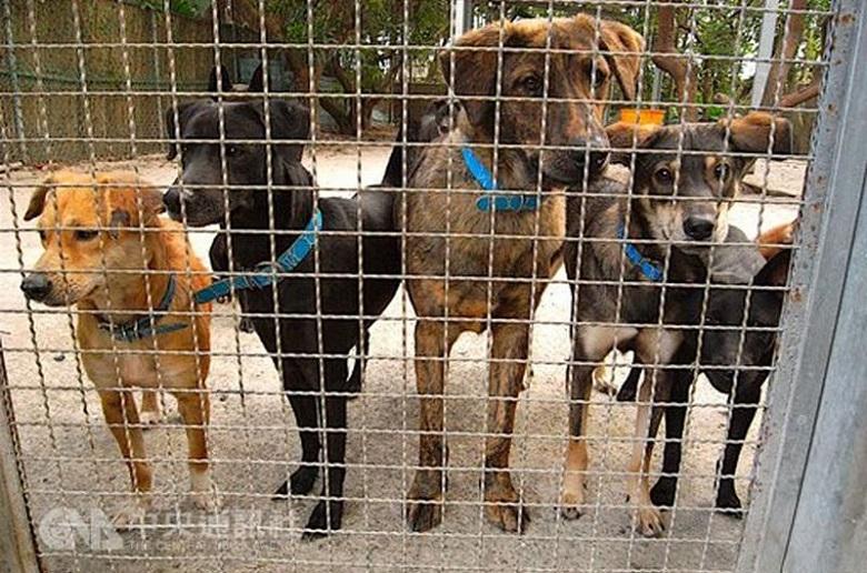 טייוואן אוסרת על אכילת כלבים וחתולים