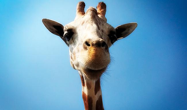 נשיונל ג'יאוגרפיק: עבר זמנם של גני חיות