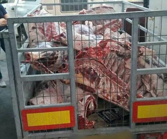 טמרה: כ-6 טון בשר נתפסו על ידי שוטרי משמר הגבול