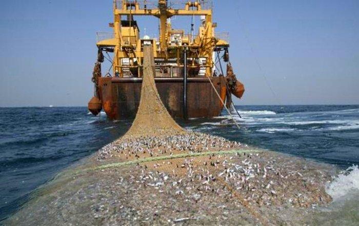 עשירית מהדגים שנתפסים באוקיינוסים נזרקים בחזרה מתים או גוססים