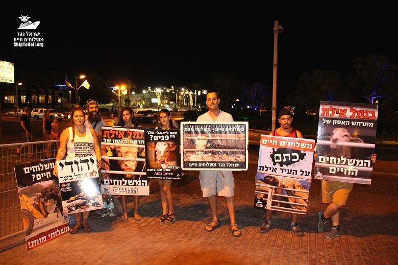 'מחאת העגלים' מתרחבת: הפגנות ואירועי מחאה נגד המשלוחים החיים של עגלים וטלאים לישראל