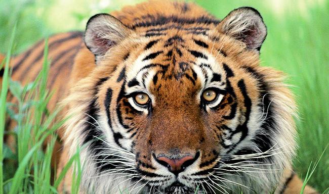 סלובקיה אוסרת על ניצול חיות בר בקרקסים