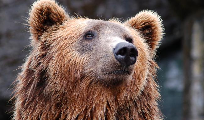 ויאטנאם: סוף לחוות דובים
