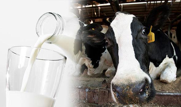 בריטניה: מותר למתג חלב כ'לא-הומני'