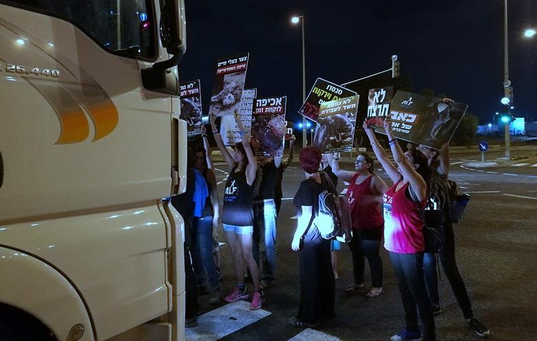 מפגינים חוסמים משאית עמוסה בעלי חיים מאניית המגיפה ביציאה מנמל חיפה